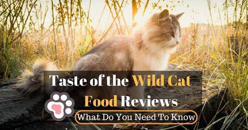 Taste Of The Wild Cat Food Review Recalls Amp Ingredients 2018