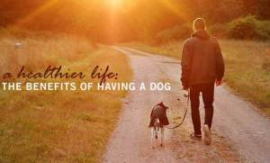 benefits of having a dog in your life