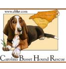 Carolina Bassett Hound Rescue