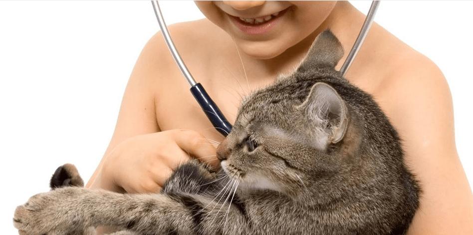 Boy + Cat