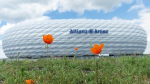 Poppies at Allianz Arena
