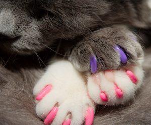 soft-paw