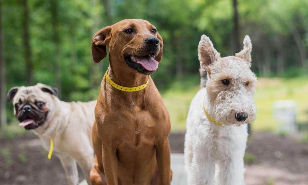 Dogs in yard at Lakeland