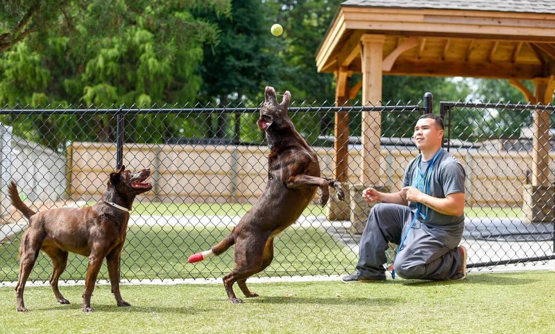 Dogs at memphis doggie daycare