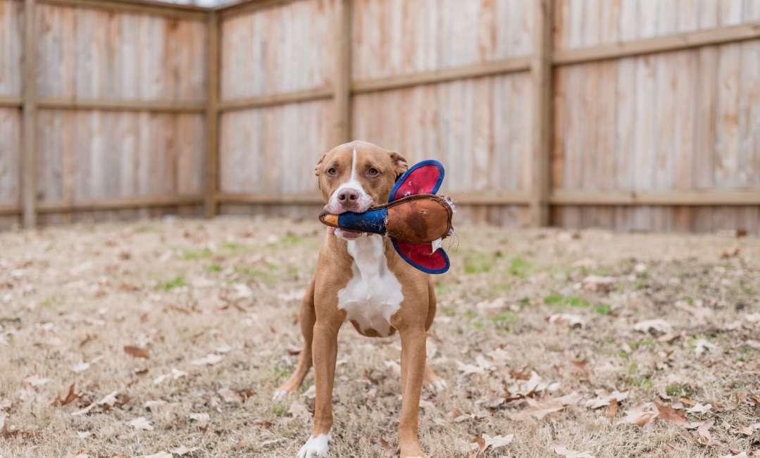 Doggie daycare dog at Lakeland