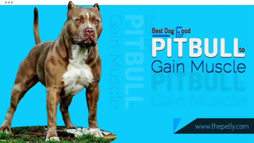 Best dog food for pitbulls to gain weight