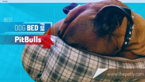 Image of the best dog bed for pitbulls