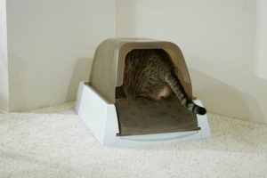 Best Litter Box for Odor Control