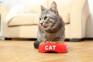 Natural Balance Cat Food Reviews