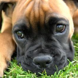 a dog's soul