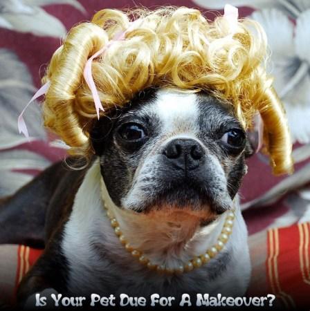 dog makeover