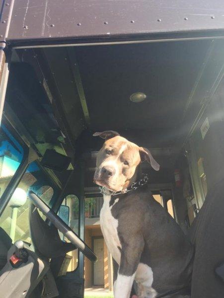 ups driver adopts pit bull