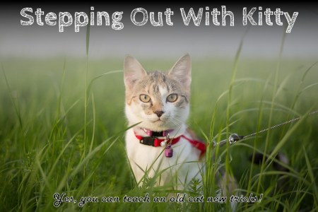 stepping out with kitty