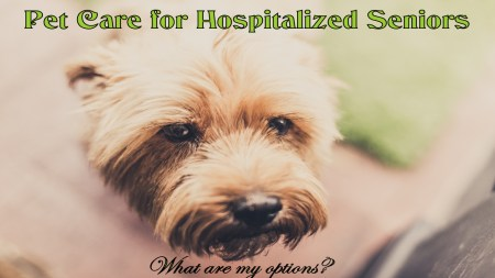 pet care for hospitalized seniors