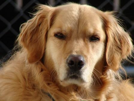 cautious dog