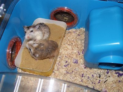 Do Hamsters Fight?