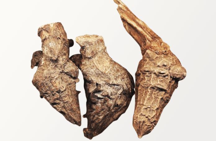 Aconite Root