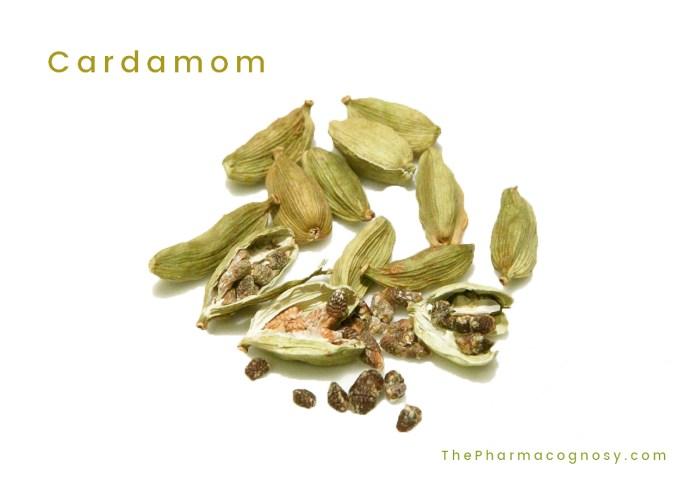 Cardamom, Cardamon