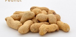 Peanut Uses, Botanical Source, Characters, and Chemical Constituents
