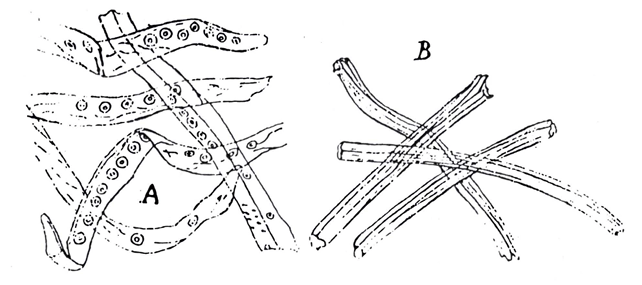 Rayon – Macroscopical and microscopical characters