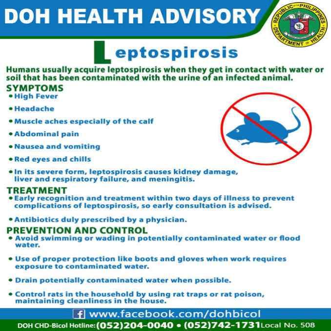 doh health advisory on leptospirosis