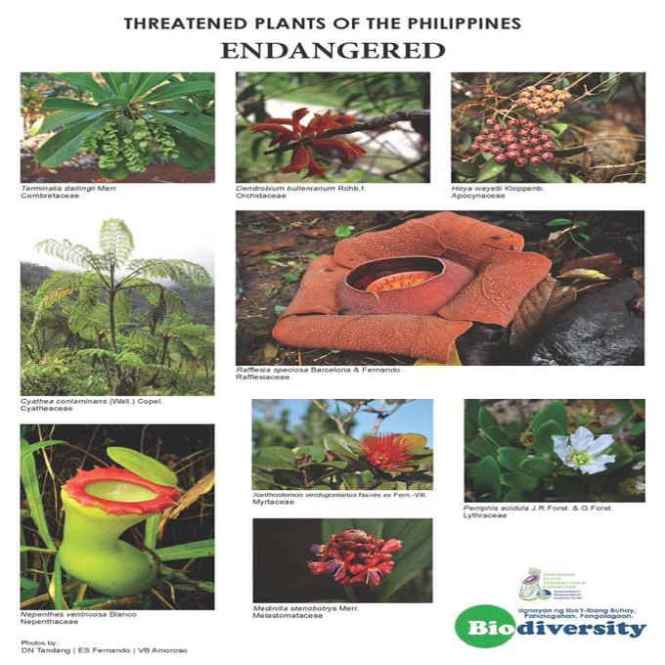endangered plants in the philippines