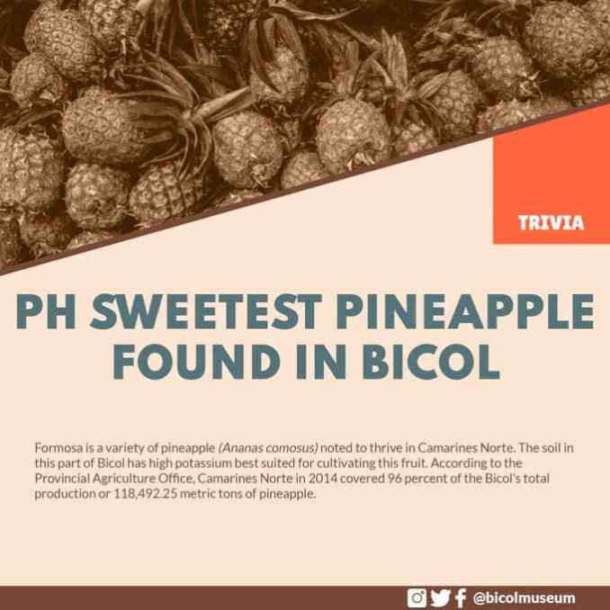 sweetest pineapple in the philippines
