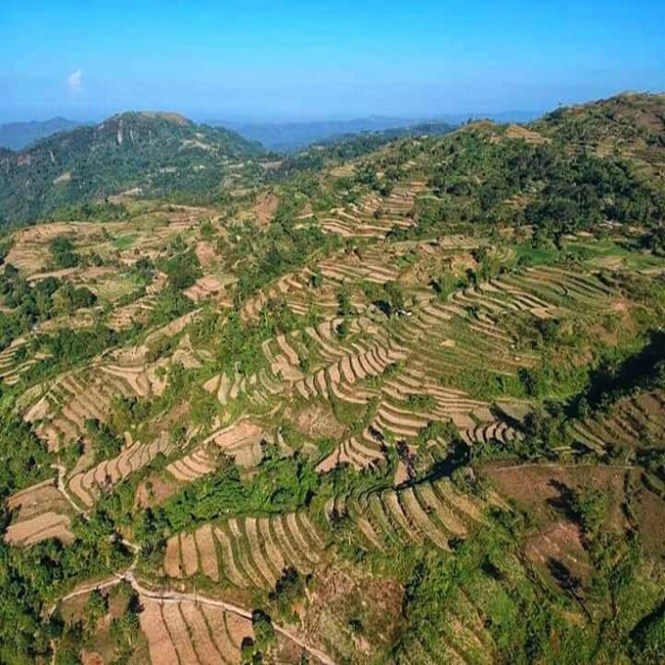 daeng rice terraces