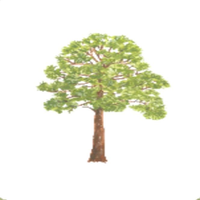 betis tree