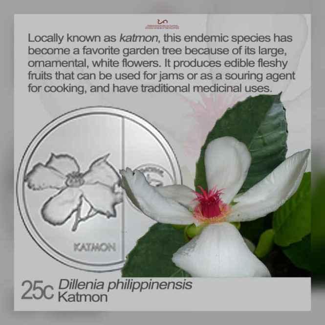 katmon flower
