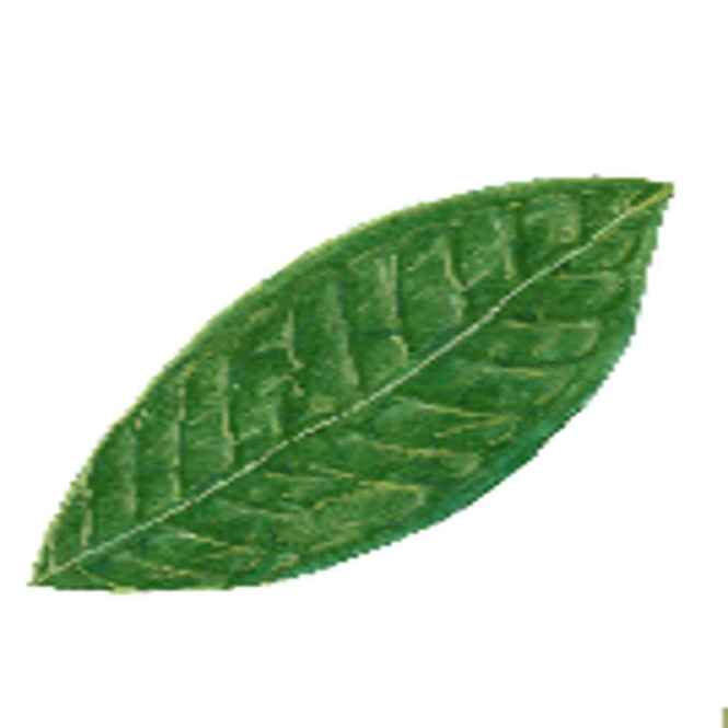 tambis leaves