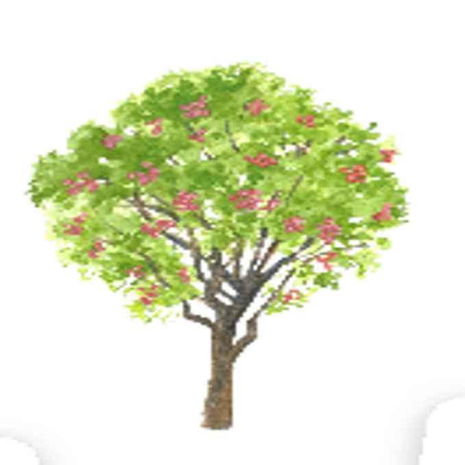 tambis tree