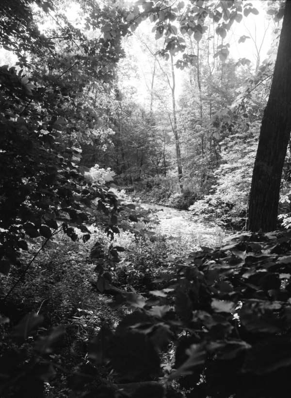 Peering into the Wild (Photo)
