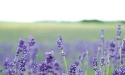 take a mini retreat with aromatherapy