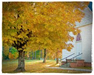 Maple trees in front of the Methodist Church on Old Lexington Rd.