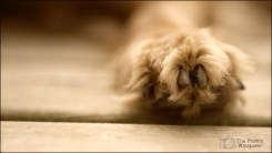 kael's paw