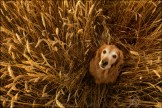 how crop circles are made