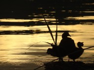 Mother and chicks on Lago d'Averno