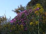 Wild flowers on Capo Miseno