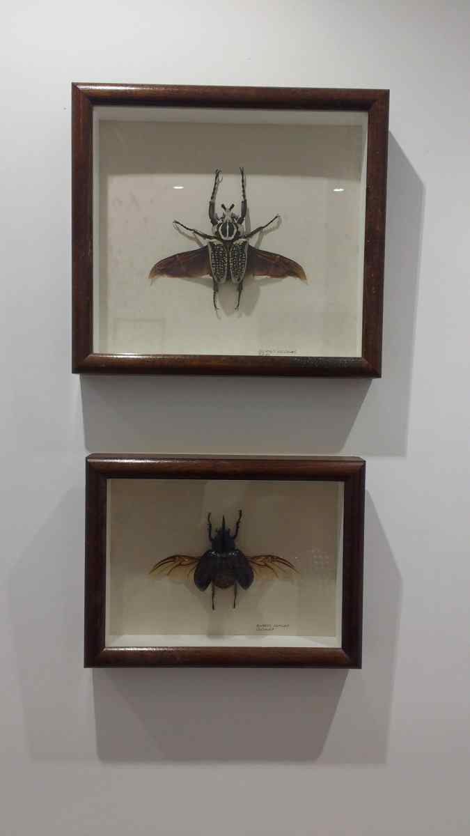 Winged bugs locked in flight. Displayed in deep box frames, and hung in a guest room. The use of creepy crawlies is a well-known way of deterring guests of the more squeamish nature.
