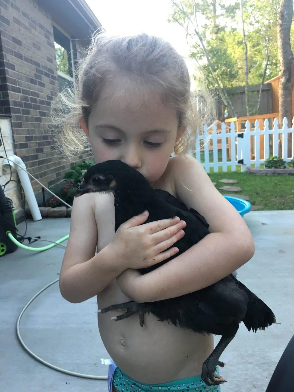 Black Jersey Giant pet