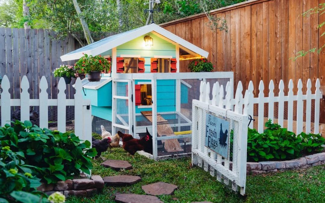 Backyard Chicken Coop – My Feather Babies
