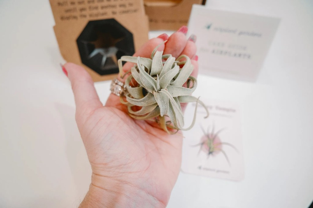 Airplant Garden Review