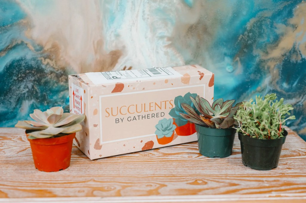 Succulents by Gathered