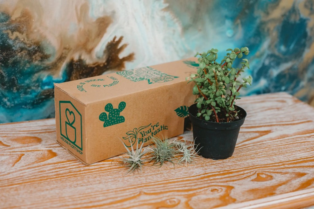 House Plant Box Review