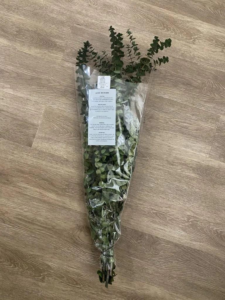 Dried Eucalyptus