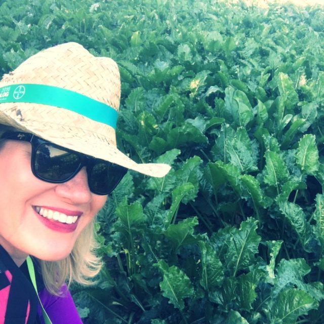 I felt at home in a German sugar beet field.