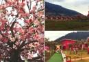 Kitty Resort Phu Ruea