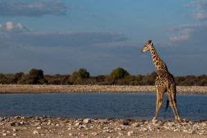 namibia-africa