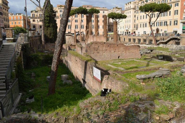 roman-ruins-Torre-Argentina-Cat-Sanctuary